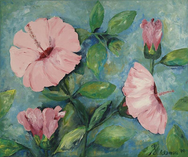 Hibiskus, rosa